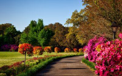 Garteninspiration zum August