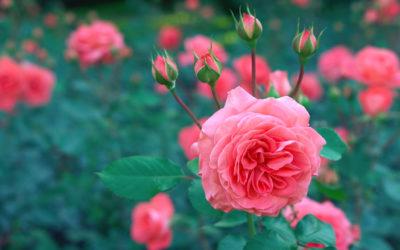 Herzlich Willkommen bei b-diegartengestalterin