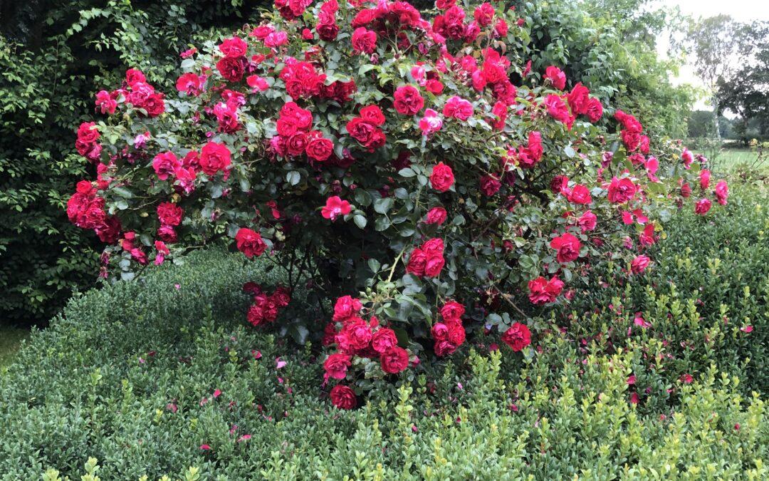 Gartenparadies in Radbruch